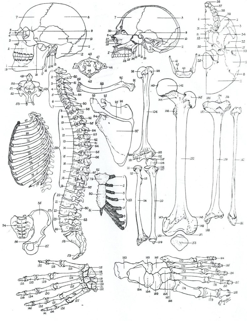 Anatomy Coloring Pages Anatomy Coloring Book Animals Save Free Animal Pages Inside Wuming