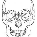 Anatomy Coloring Pages Anatomy Skull Coloring Pages Printable Sugar Skulls Within Page