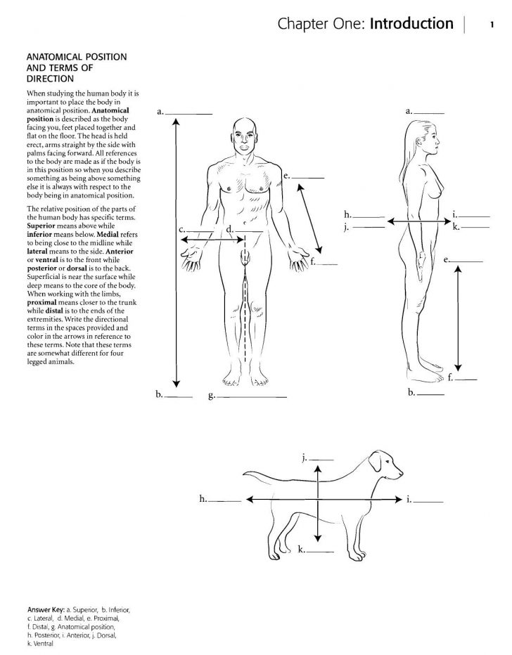 Anatomy Coloring Pages Kaplan Anatomy Coloring Book Anatomy And Coloring Books Coloring