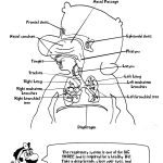 Anatomy Coloring Pages More Like Doctor Marios Anatomy Coloring Book Page 18463