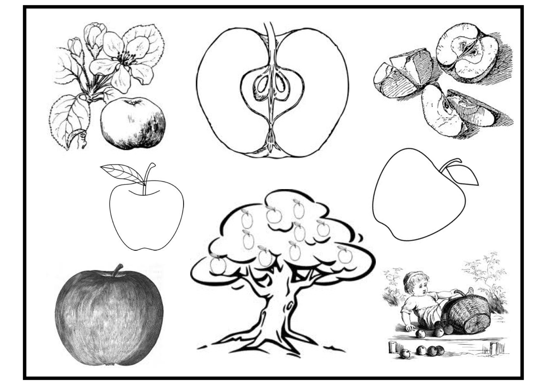 Apple Coloring Pages Apple Coloring Pages