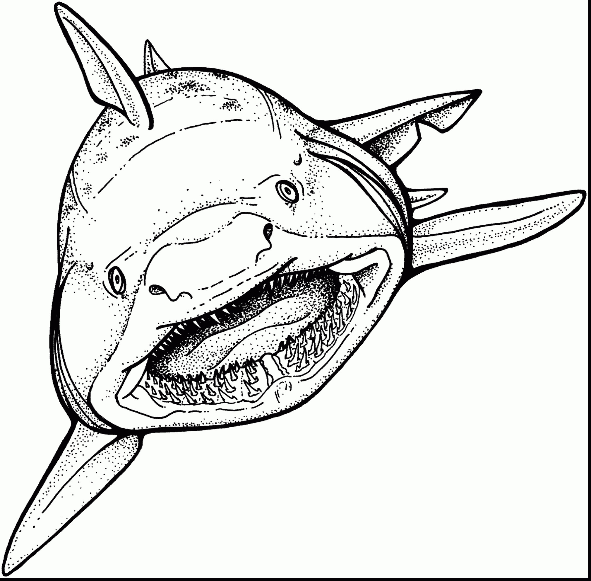 Coloring Pages Sharks Bargain Coloring Pages Sharks Free Shark 91 Ruva