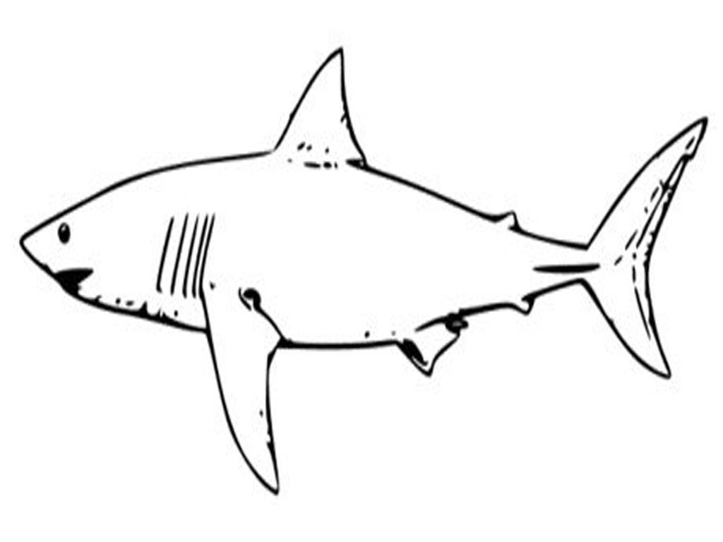 Coloring Pages Sharks Hammerhead Shark Coloring Pages Best Coloring Pages Collection