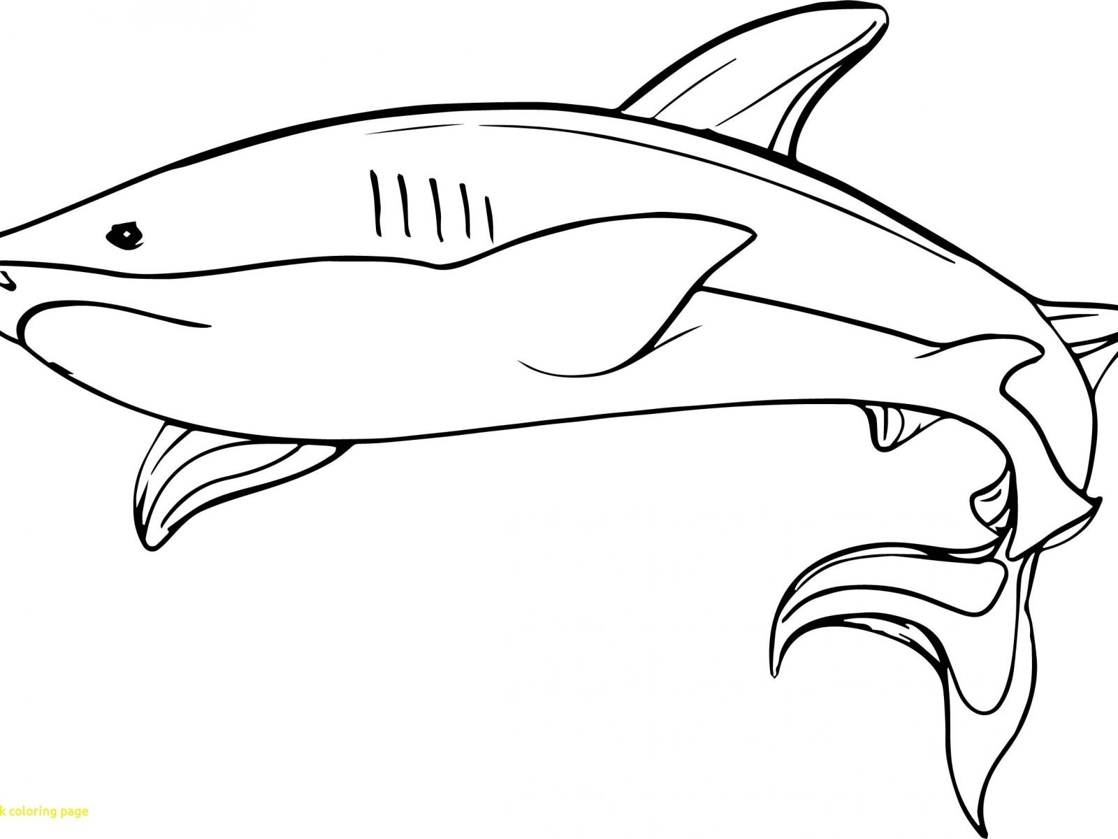 Coloring Pages Sharks Hammerhead Sharkoring Sheets Pictures Pagesouring Stupendous Shark