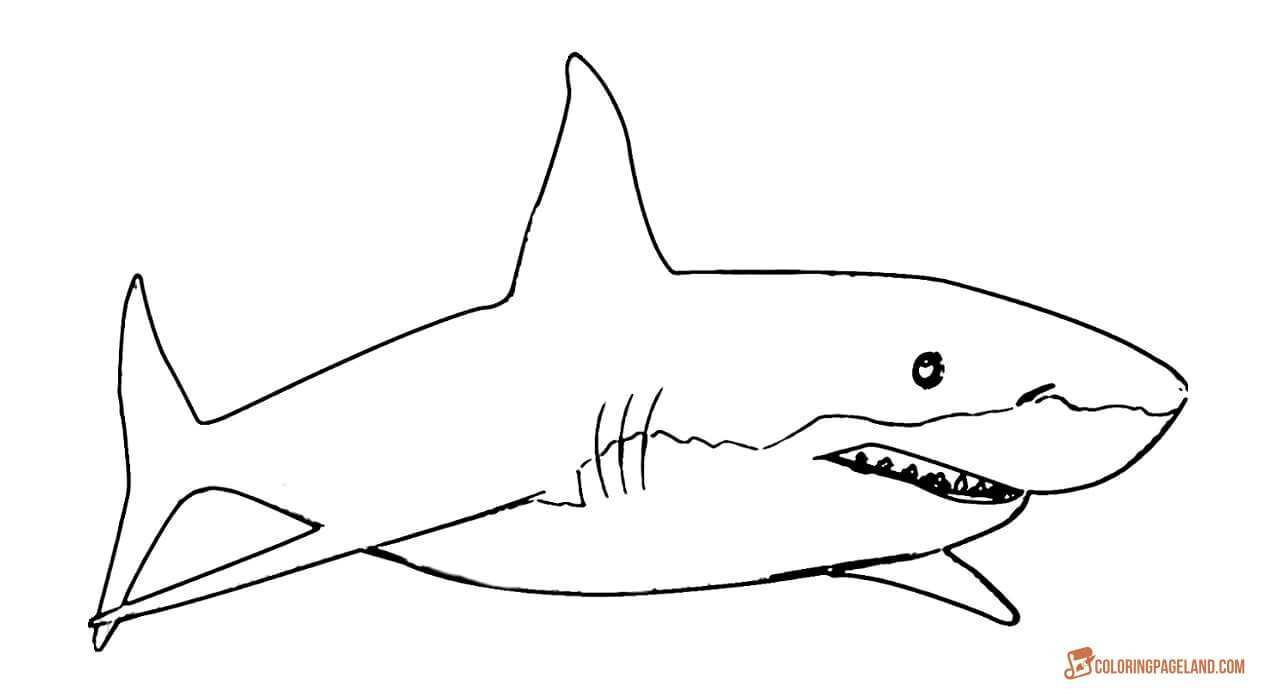 Coloring Pages Sharks Jaws Coloring Pages Free Luxury Basking Shark Coloring Pages