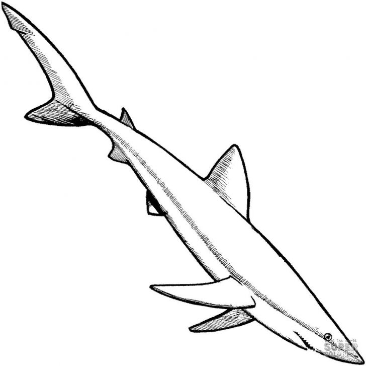 Coloring Pages Sharks Prehistoric Shark Coloring Pages Sharks Sketch Get Coloring Page