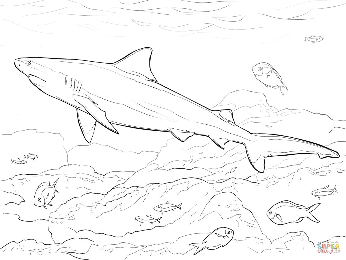 Coloring Pages Sharks Realistic Bull Shark Coloring Page Free Printable Coloring Pages