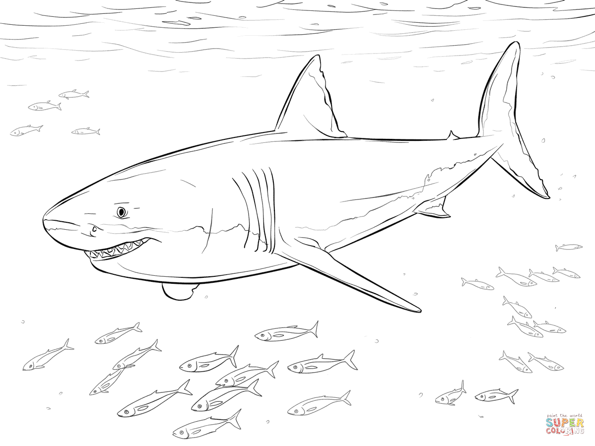 Coloring Pages Sharks Sensational Inspiration Ideas Great White Shark Coloring Pages Magic