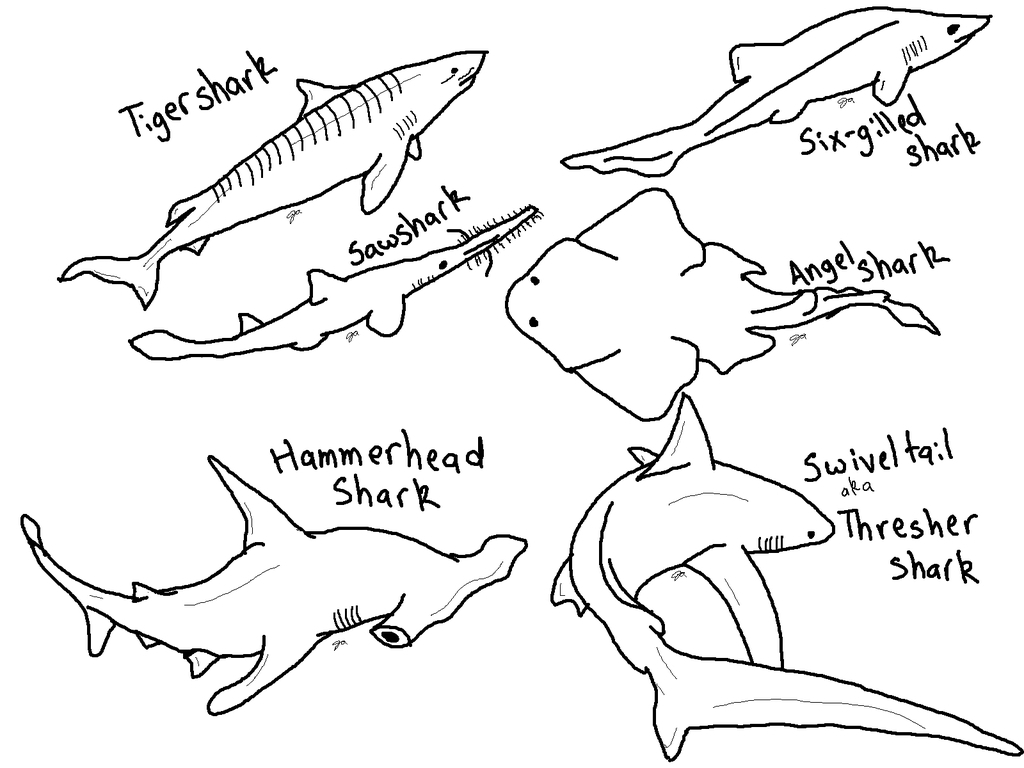 Coloring Pages Sharks Shark Coloring Pages Printable To Print Printable Shark Coloring