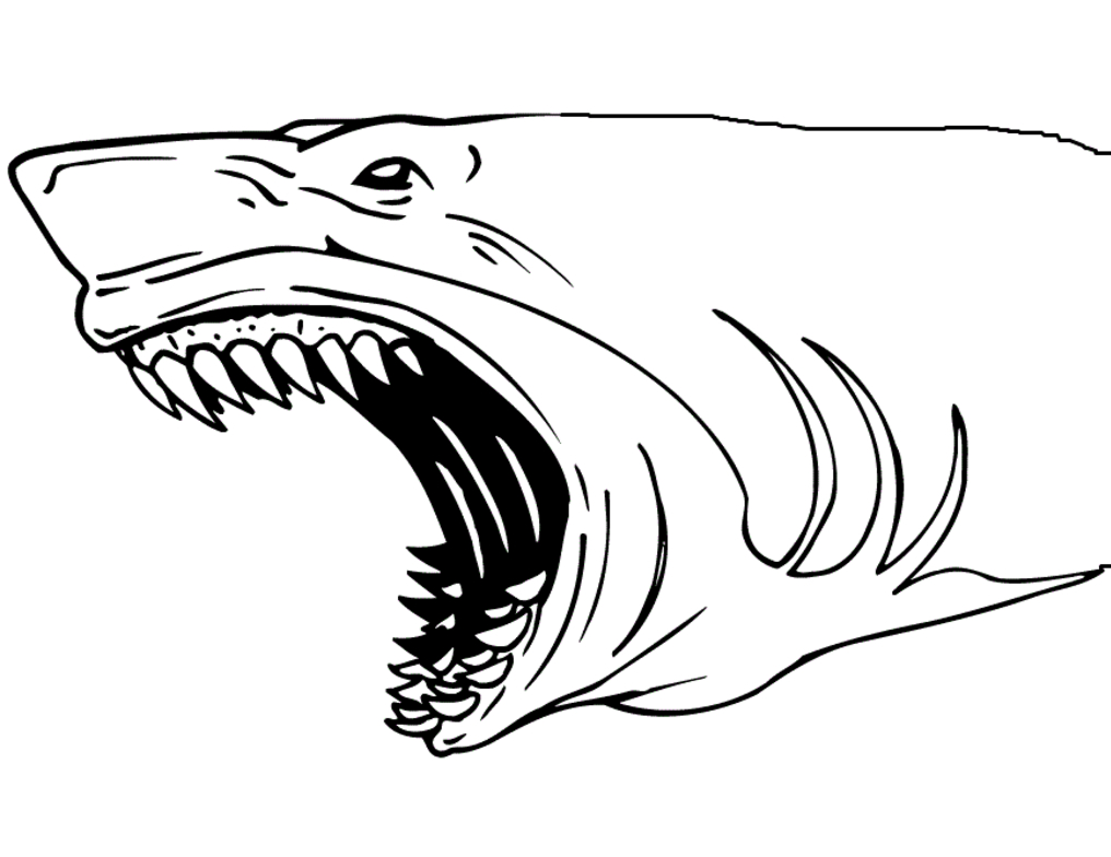 Coloring Pages Sharks Shark Jaws Coloring Page Coloring Page Book For Kids