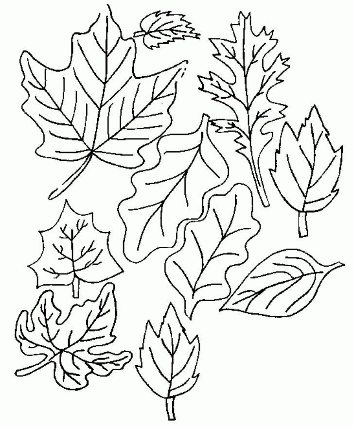 Fall Tree Coloring Pages Elm Tree Coloring Pages