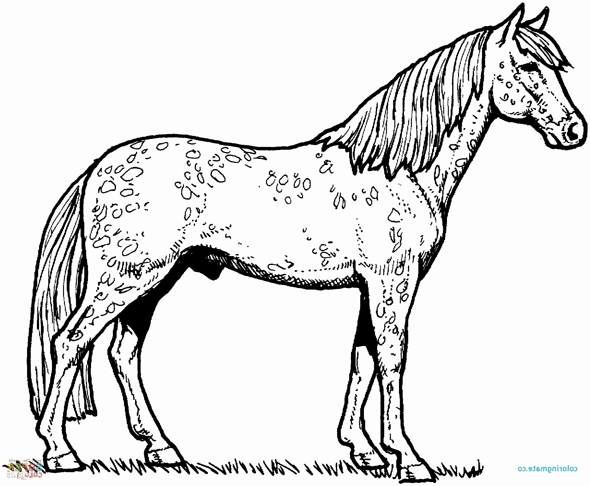 Free Horse Coloring Pages Free Horse Coloring Page Xflt Free Horse Coloring Pages
