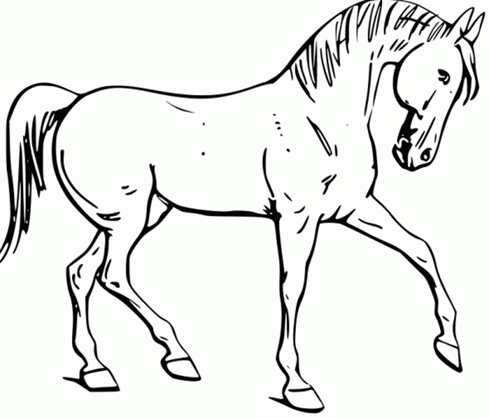 Free Horse Coloring Pages Fun Horse Coloring Pages For Your Kids Printable