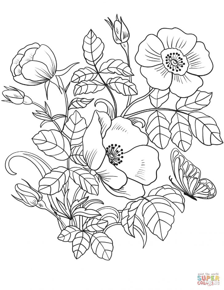 Free Printable Flower Coloring Pages Flower Color Pages Islandersshoponline