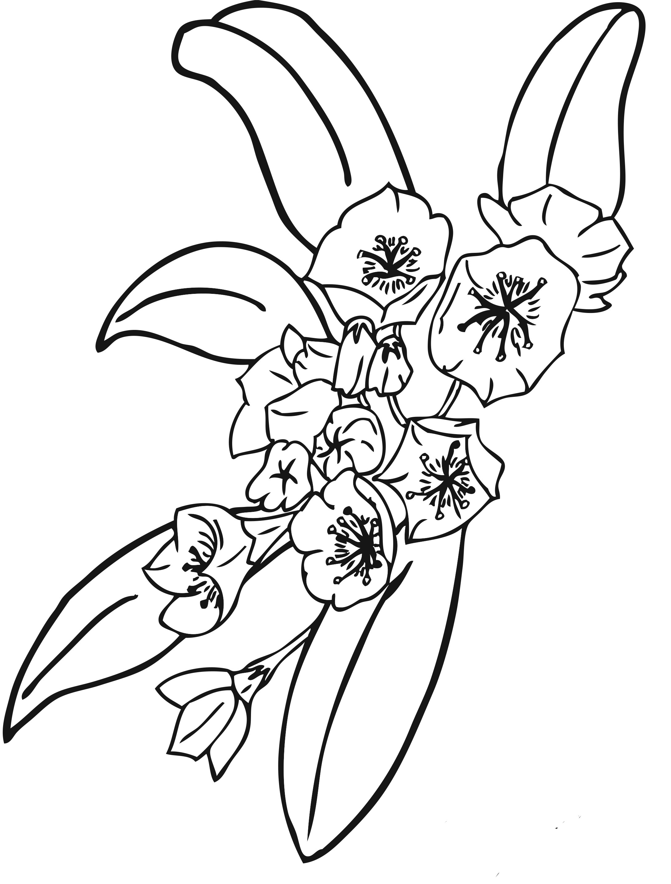 Free Printable Flower Coloring Pages Free Printable Flower Coloring Pages For Kids
