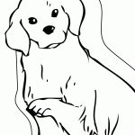 Golden Retriever Coloring Page 27 Golden Retriever Coloring Page Printable Free Coloring Pages