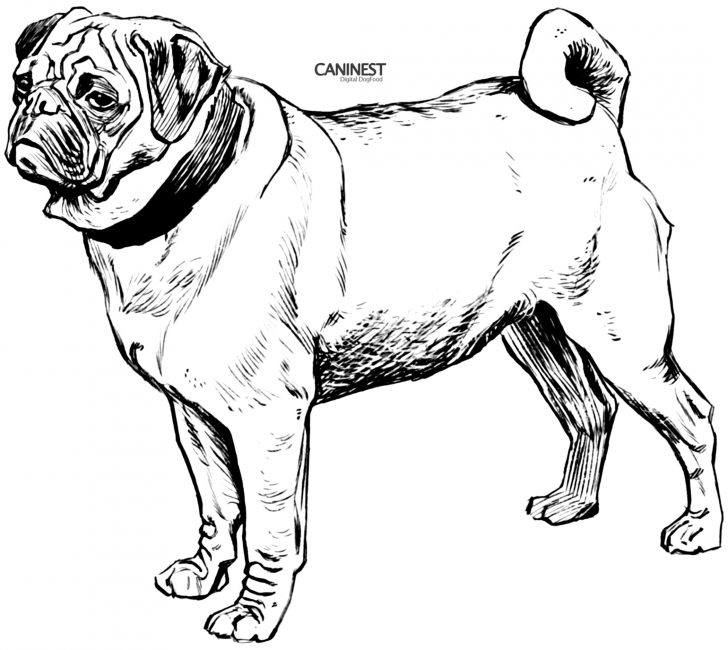 Golden Retriever Coloring Page Coloring Pages Draw A Golden Retriever Courtoisieng