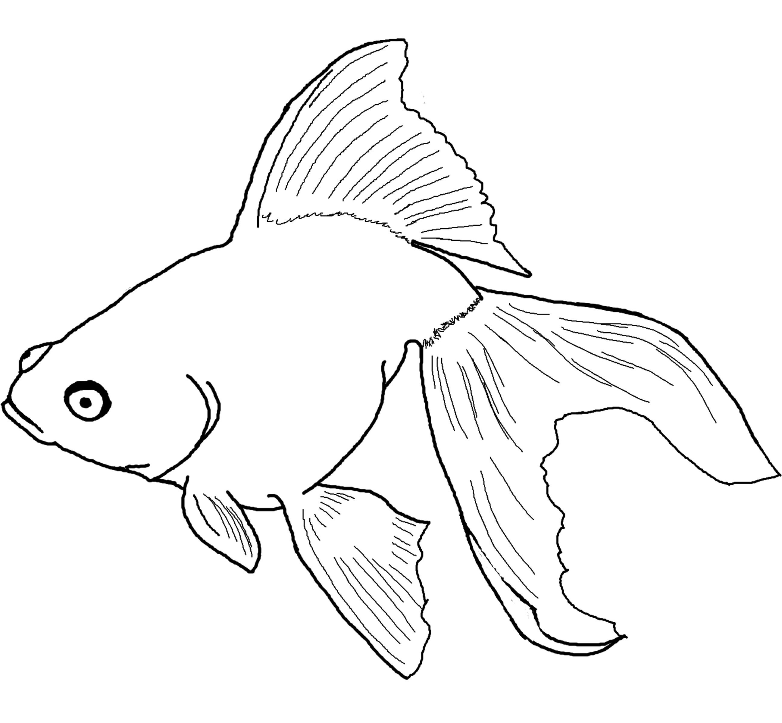 Goldfish Coloring Page Gold Fish 2 Coloring Page Goldfish Coloring Page Topsailmultimedia