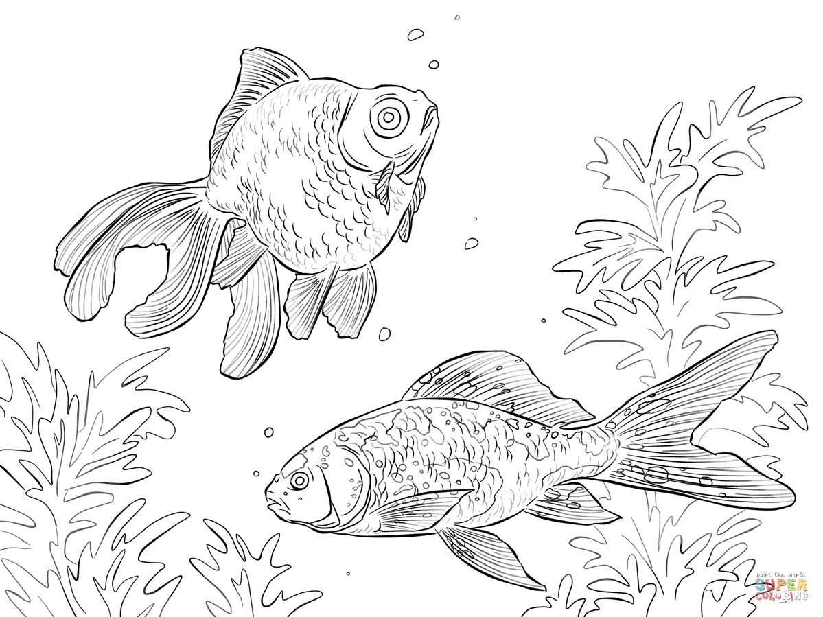 Goldfish Coloring Page Goldfishes Coloring Pages Free Coloring Pages