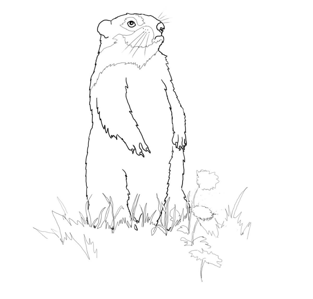 Groundhog Day Coloring Pages Free Printable Groundhog Coloring Pages ...
