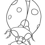Ladybug Coloring Page Free Ladybug Coloring Pages To Print Out And Color