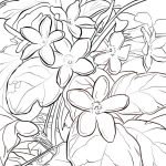 Mayflower Coloring Page Mayflower Coloring Page Free Printable Coloring Pages