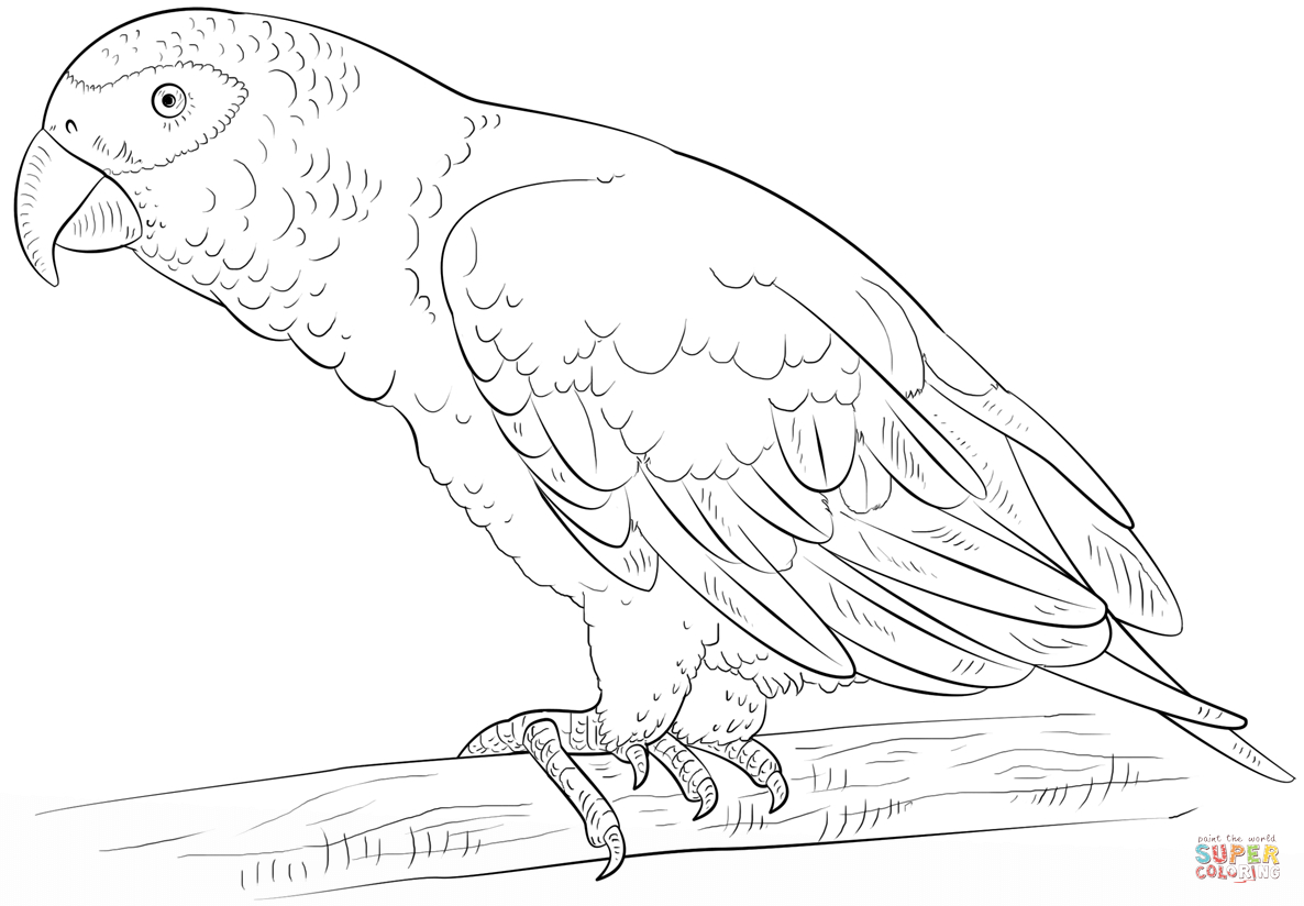 Parrot Coloring Pages African Grey Parrot Coloring Page Free Printable Coloring Pages