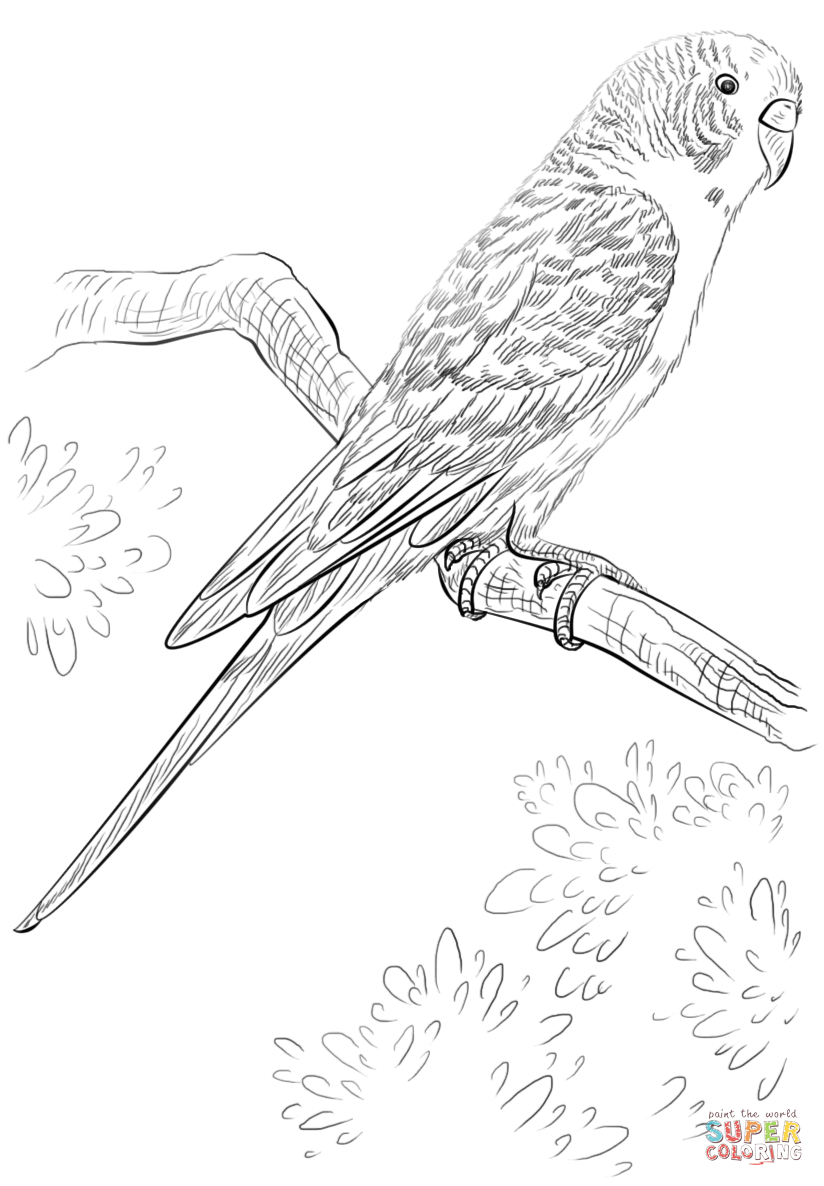 Parrot Coloring Pages Budgie Parrot Coloring Page Free Printable Coloring Pages