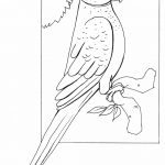 Parrot Coloring Pages Educations Christmas Parrot Coloring Pages Printable Page Book