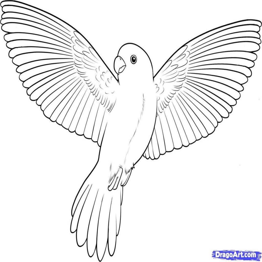 Parrot Coloring Pages Flying Parrot Coloring Pages At Getdrawings Free For Personal