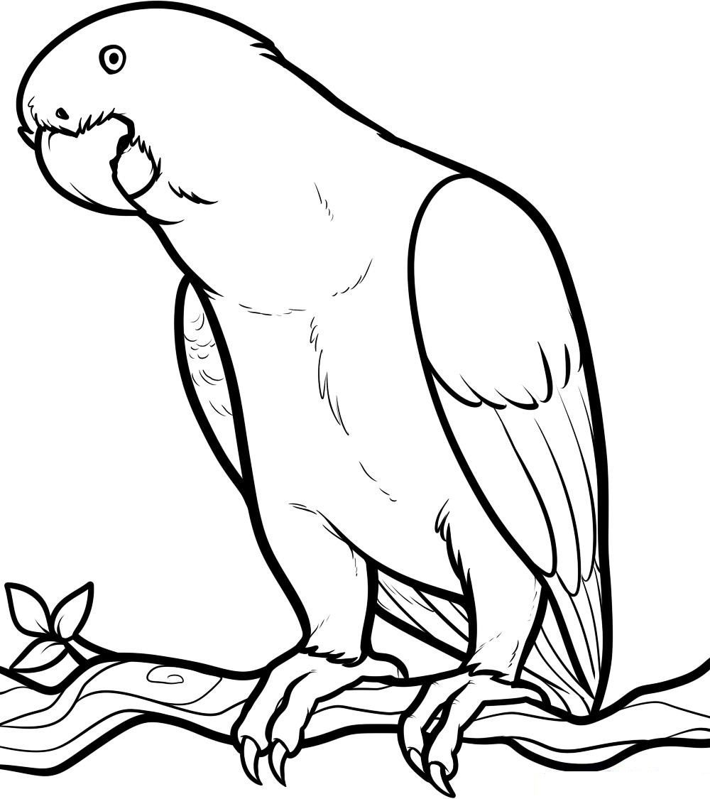 Parrot Coloring Pages Free Printable Parrot Coloring Pages For Kids Coloring Home
