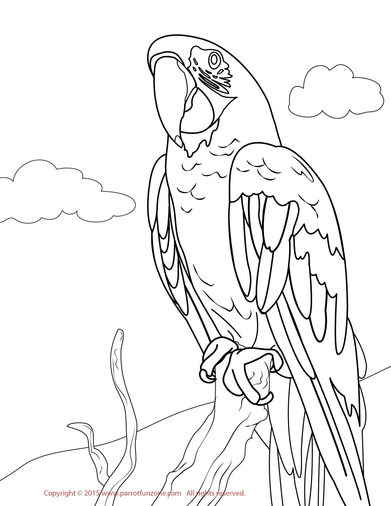 Parrot Coloring Pages Macaw Parrot Coloring Pages 2019 Open Coloring Pages