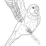Parrot Coloring Pages Parrots Coloring Pages Free Coloring Pages