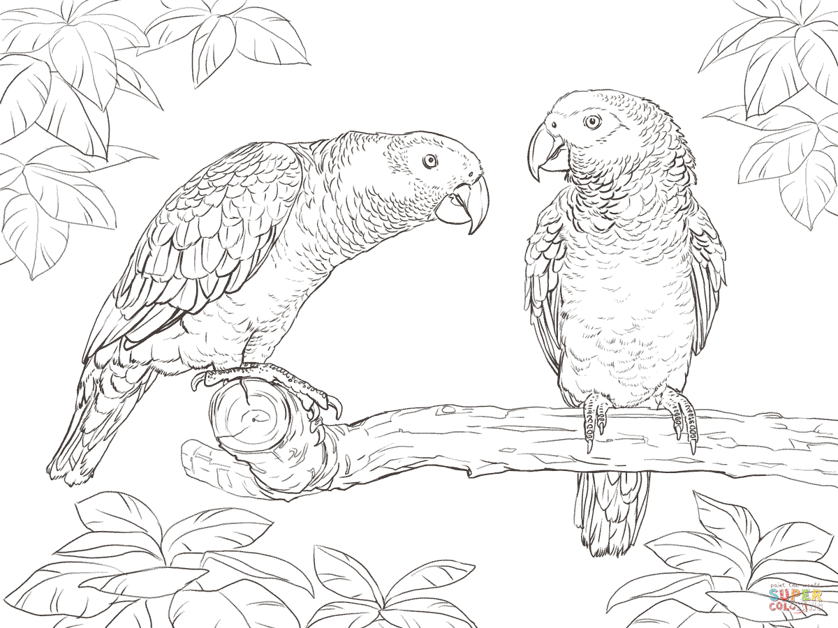30+ Great Photo of Parrot Coloring Pages
