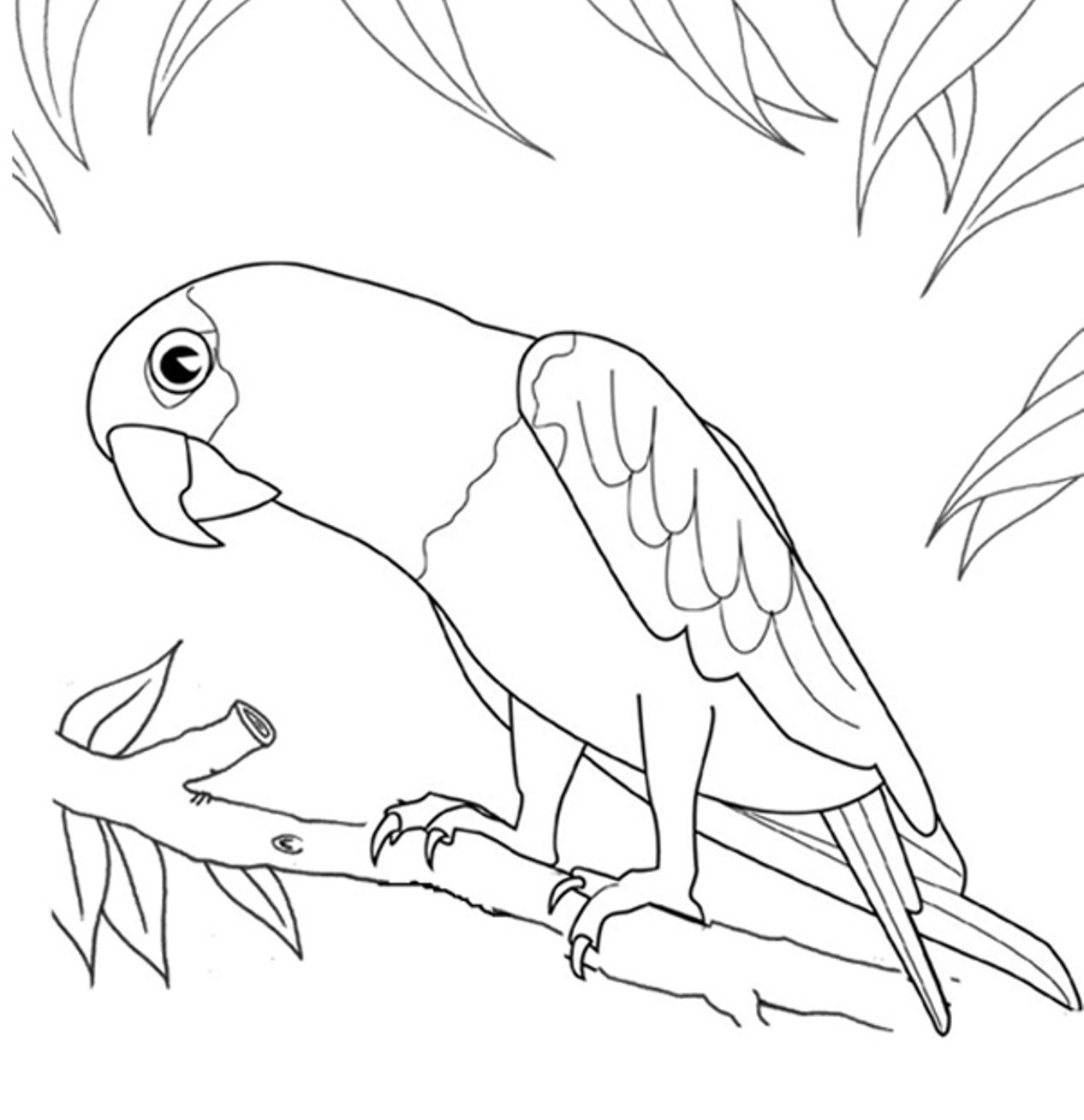 Parrot Coloring Pages Printable Bird Coloring Page Parrot Animal Coloring Pages Of