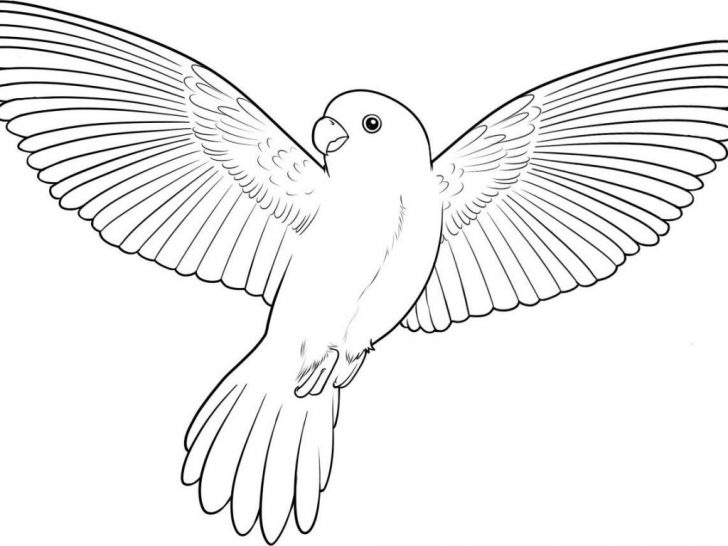 Parrot Coloring Pages Unforgettable Parrot Coloring Pages Flying Birds Colouring Online