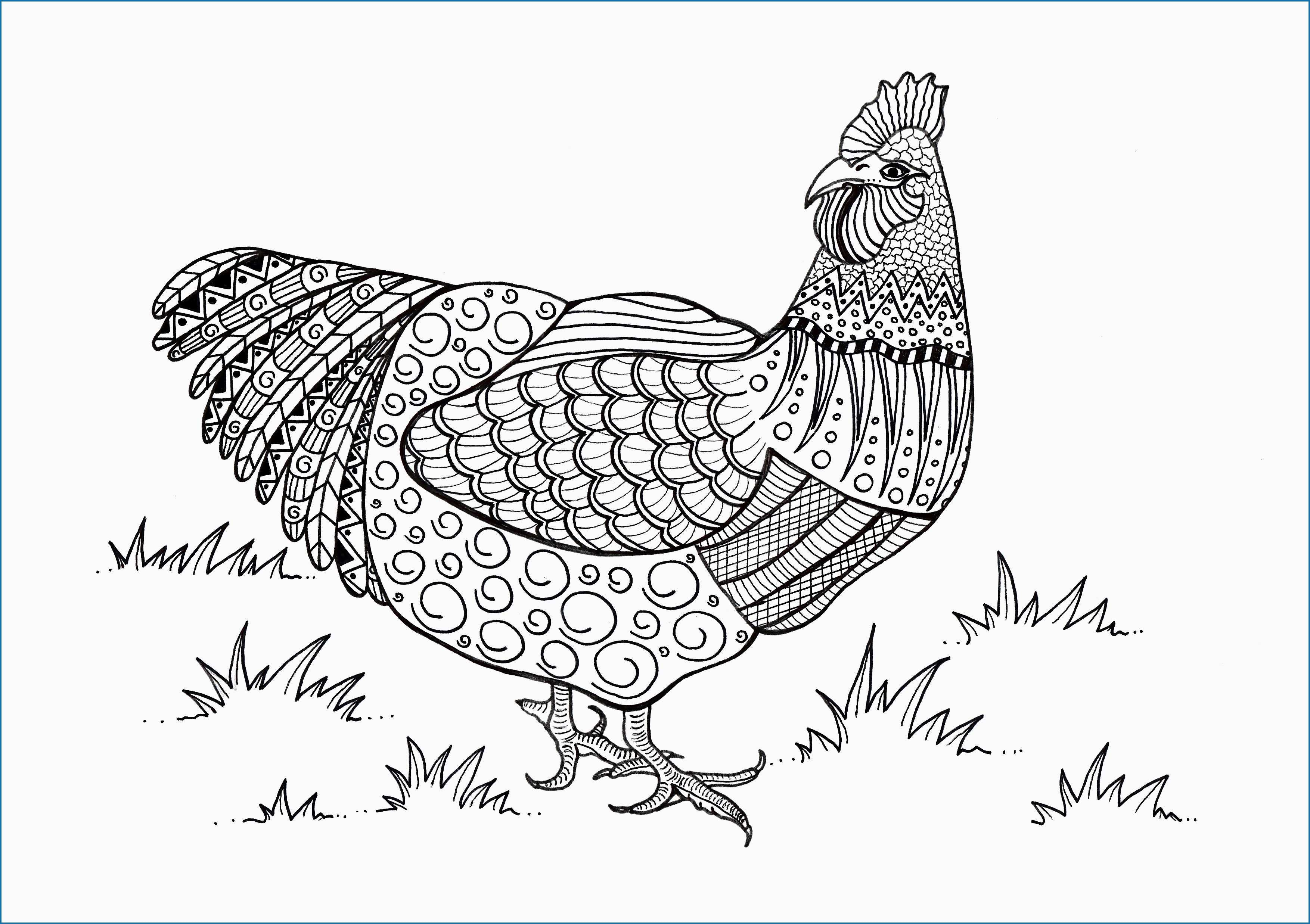 Rooster Coloring Page Rooster Coloring Page 40 Needful Figure You Must Consider Anablog