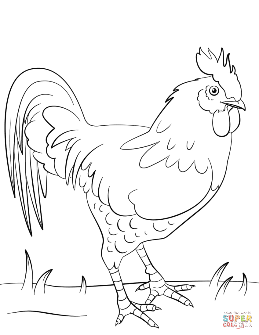 25+ Brilliant Photo of Rooster Coloring Page