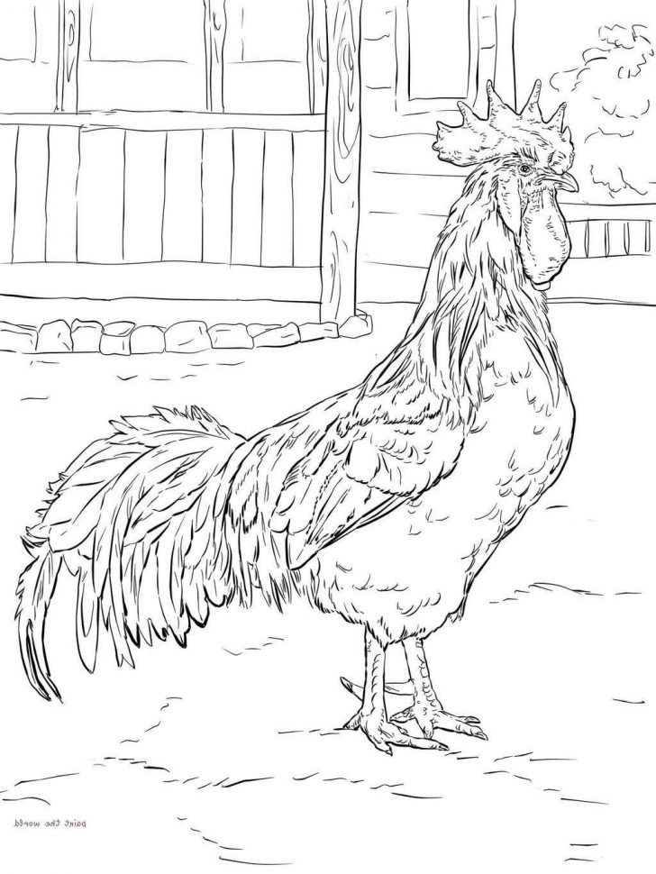 Rooster Coloring Page Year Of The Rooster Coloring Pages Chicken Coloring Sheets Get