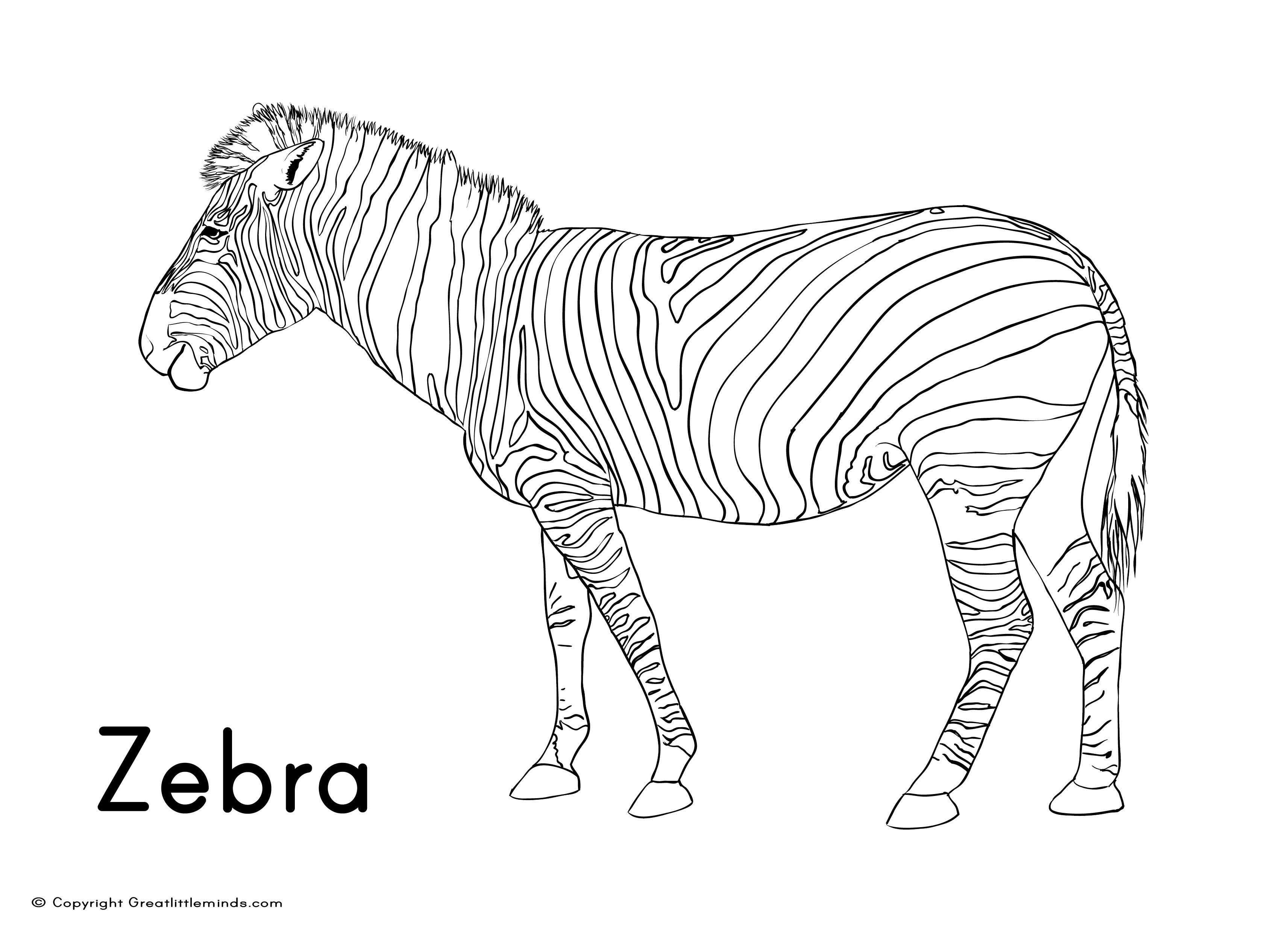 Zebra Coloring Pages Coloring Pages Zebra Colouring Sheet Zootable Free Put Me In The