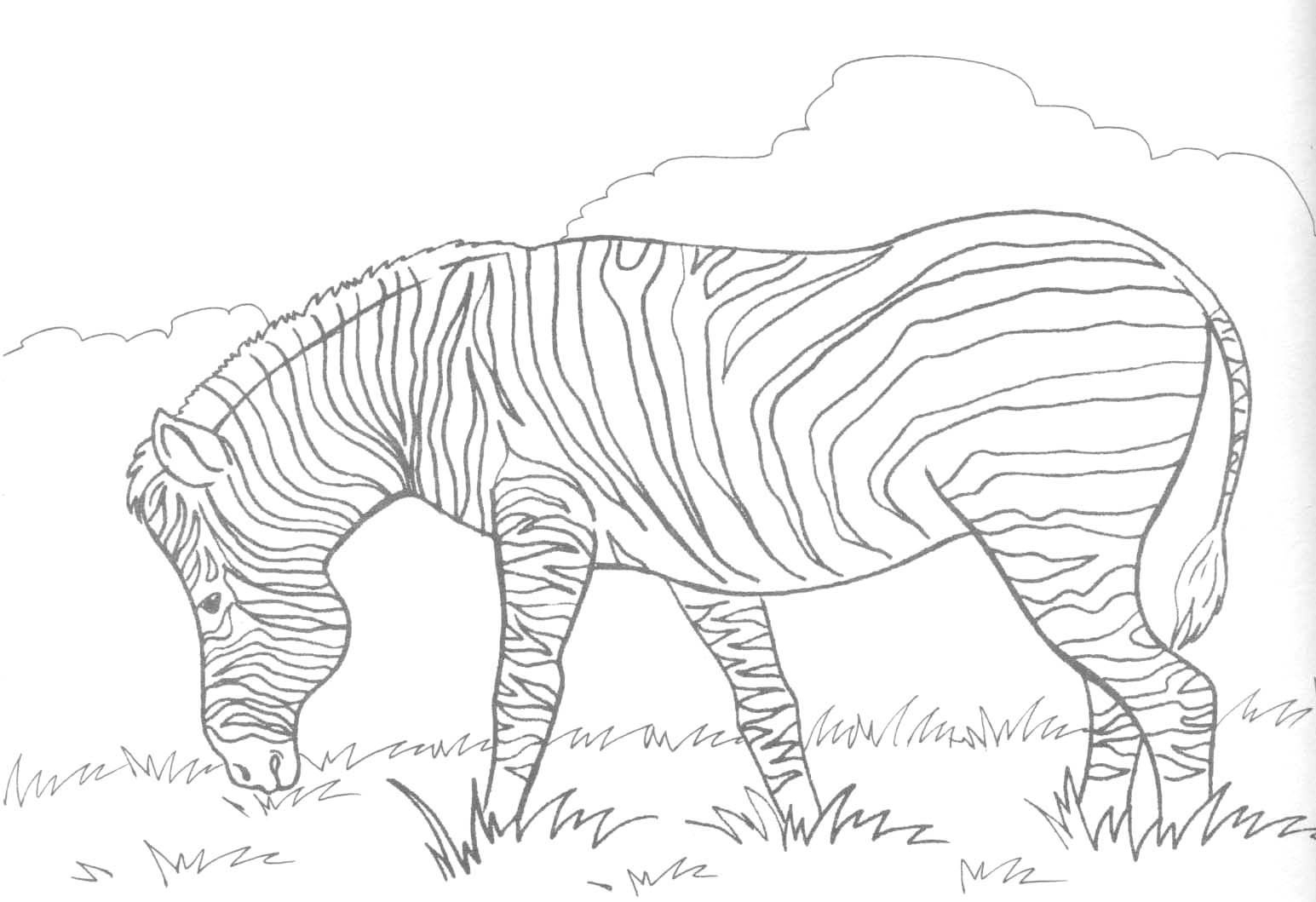 Zebra Coloring Pages Cute Ba Zebra Coloring Page Free Printable Coloring Pages Idea