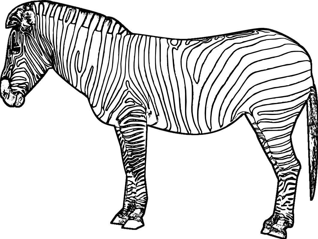 Zebra Coloring Pages Exclusive Zebra Colouring Page Last Chance Color 19 Animals