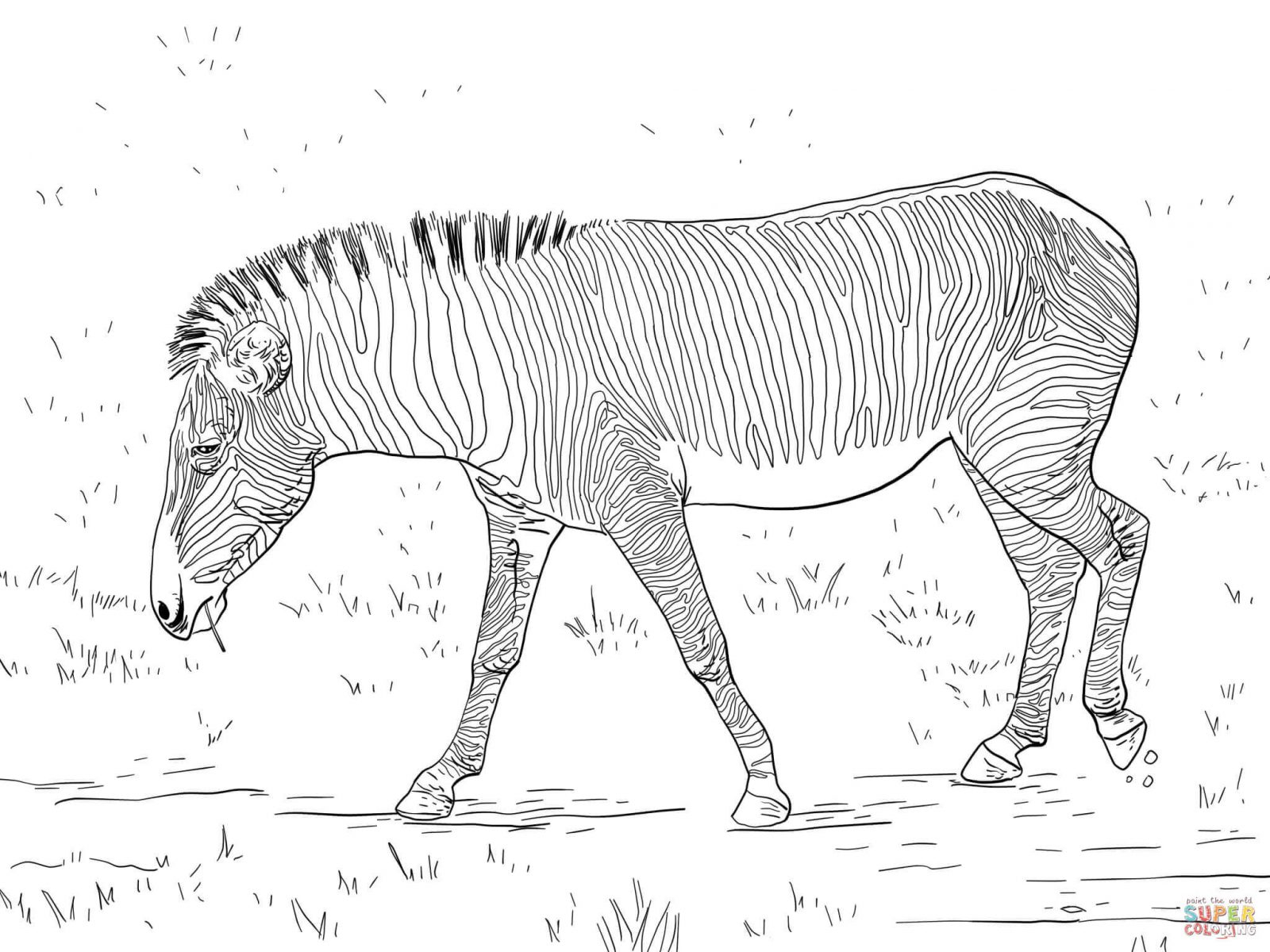 Zebra Coloring Pages Fearsome Zebra Coloring Pages Free Printable Ba Cute For Without