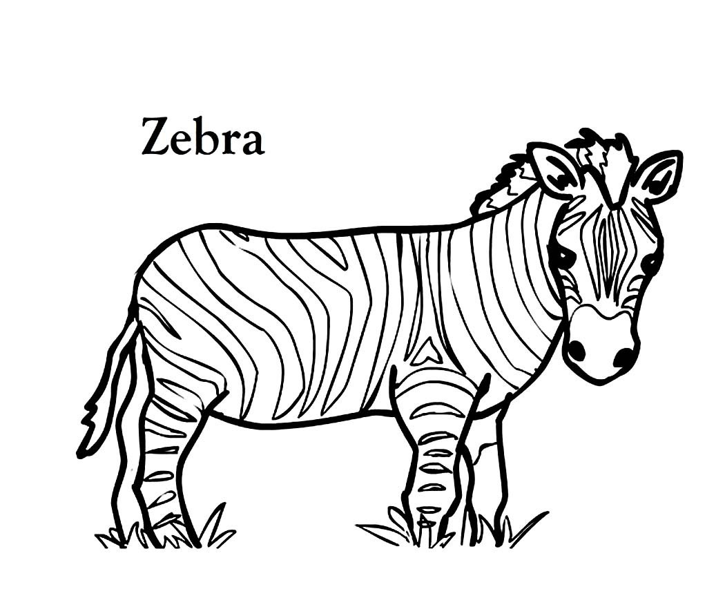 Zebra Coloring Pages Grevys Zebra Or Imperial Zebra Coloring Page On Zebra Coloring Pages