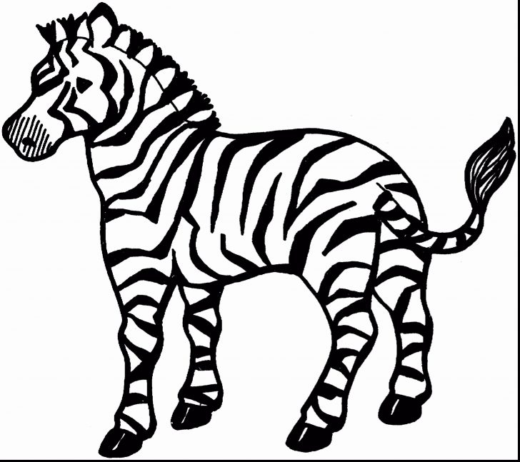 Zebra Coloring Pages Marty The Zebra Coloring Pages Fresh Amazing Book And Cute Ba