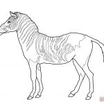 Zebra Coloring Pages Zebra Coloring Pages Printable At Getdrawings Free For